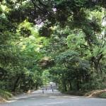 Meiji_path